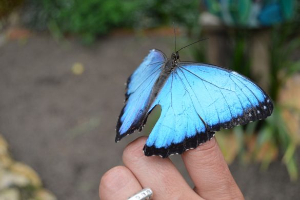 Kelebek Çiftiği